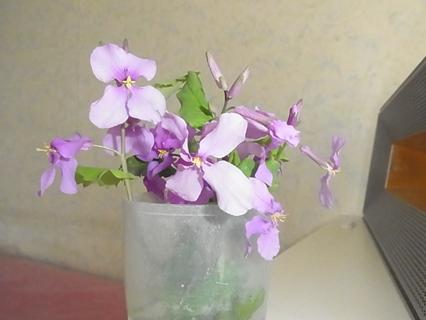 かわいいお花